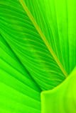 Texture of leaf Royalty Free Stock Images