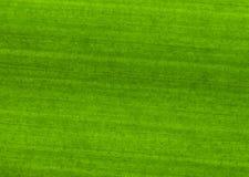 Texture of leaf Stock Photos