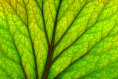 Texture of leaf Stock Photos