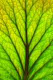 Texture of leaf Stock Images