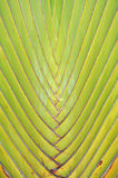 Texture of leaf bases Stock Photography