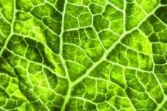 The texture of the leaf bright green speckled Stock Photos