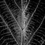 Texture Leaf Overlay Stock Photos