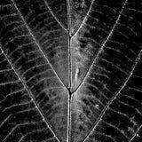 Texture Leaf Overlay Stock Photos
