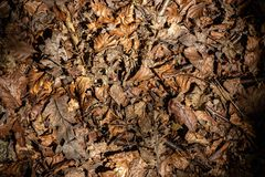 The texture of a leafy background royalty free stock photography
