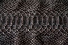 Texture of leather, black cobra royalty free stock photos