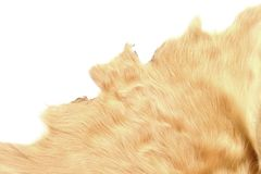 Texture of leather of cow Royalty Free Stock Image
