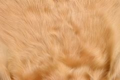 Texture of leather of cow Stock Photo