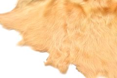 Texture of leather of cow Stock Image