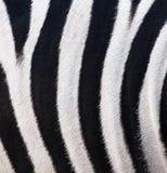 Texture of leather, fur zebra Royalty Free Stock Photos