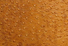 Texture of leather skin Royalty Free Stock Images