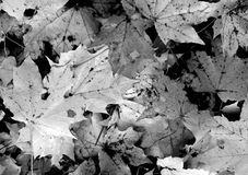 Texture of leaves Royalty Free Stock Photos