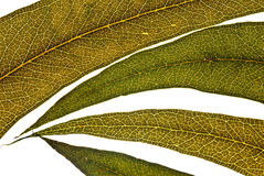 Texture Leaves Stock Image