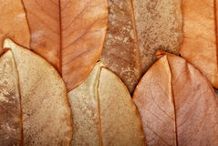 The texture of leaves Stock Photography