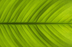 Texture of the leaves Stock Images