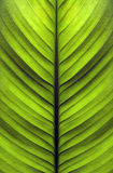Texture of the leaves Royalty Free Stock Photo