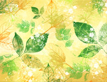 Texture of leaves of green and yellow color Stock Image