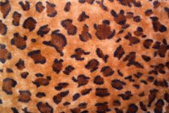 Texture of a leopard colouring. Structure of a leopard colouring Stock Photography