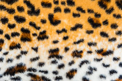 Texture of leopard leather Royalty Free Stock Image