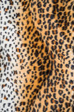 Texture of leopard leather Stock Image