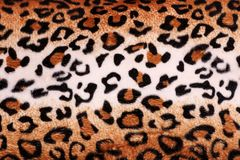 Texture of leopard tiger fur skin background. Texture of leopard tiger fur skin for background Royalty Free Stock Images