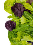 Texture of lettuce leaves Royalty Free Stock Photos