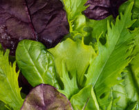 Texture of lettuce leaves Stock Images