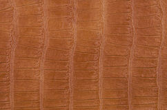 Texture of light brown leather Royalty Free Stock Images