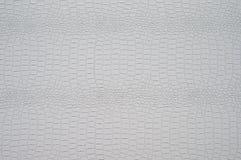 The texture of light crocodile skin. Stock Image