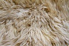 Texture of light pelt Royalty Free Stock Photo
