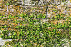 texture limestone blocks of wall  ancient palace covered with green and red moss. age  the  is 17 century. Royalty Free Stock Photography