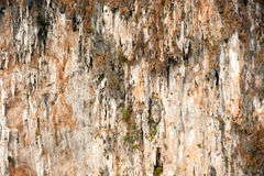 Texture of limestone mountain. Stock Image