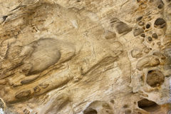 Texture of limestone wall Stock Images