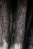 The texture of a living tree Stock Images