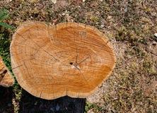 Texture of log stump Royalty Free Stock Image