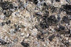 Texture of lumber ash Stock Photo