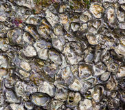Texture made of shell and stone pieces. Royalty Free Stock Photos
