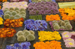 Texture of many different flowers in blocks Stock Image