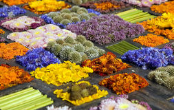 Texture of many different flowers in blocks Stock Photos