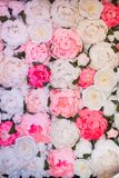 Texture of many paper white, red and pink roses stock image