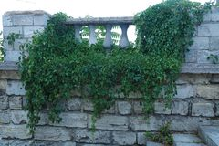 Texture. Masonry. Fragment of an ancient wall on which a green plant grows. Horisontal Stock Photography
