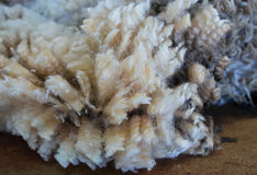 Texture of merino wool Royalty Free Stock Photography
