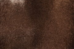 The texture of mink fur. Dark brown color close-up Royalty Free Stock Images