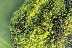 Texture of mixed forest on a sunny summer day near grass area. Aerial dron photo. Stock Photography