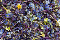 texture is a mixture of dry multi-colored flower petals Stock Image