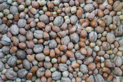 Texture mixture of hazelnut and walnut stock photography