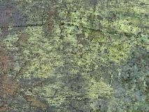 texture moite de nature de vert de lichen Photographie stock