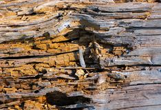 Texture of moldering wood log. Old grungy and weathered brown wooden surface background Stock Photography