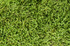 Texture of moss Stock Photo