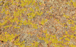Texture of moss and lichen on the stone, background Stock Photography